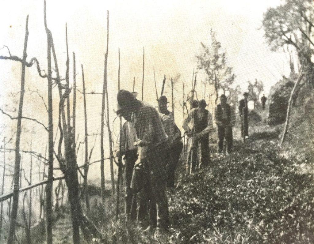 Trattamenti col solfuro di carbonio (da La fillossera - di R. Grandori, Ramo Editoriale degli Agricoltori, Roma, 1937)