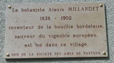 Alexis03