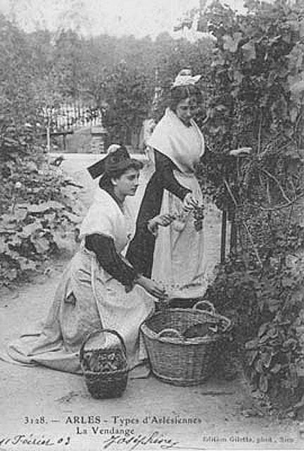 Arlésiennes_vendangeant_1903