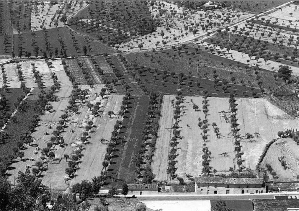 coltivazione promiscua Umbria 1966