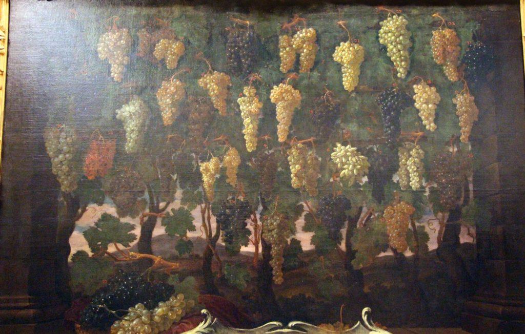 """Uve di Bartolomeo Bimbi (1700). Il Bimbi creò quella che è una vera e propria """"ampelografia visiva"""" delle uve (e altri frutti) toscani del suo tempo, dietro incarico di Cosimo III de Medici."""
