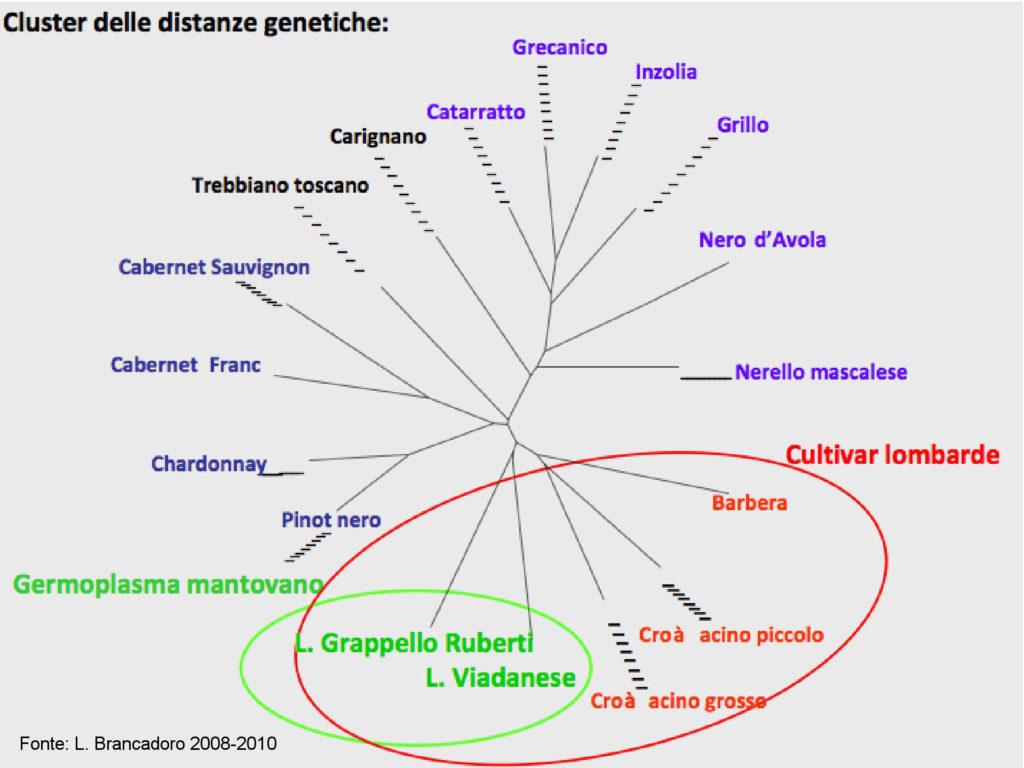 Distanze genetiche Castelli