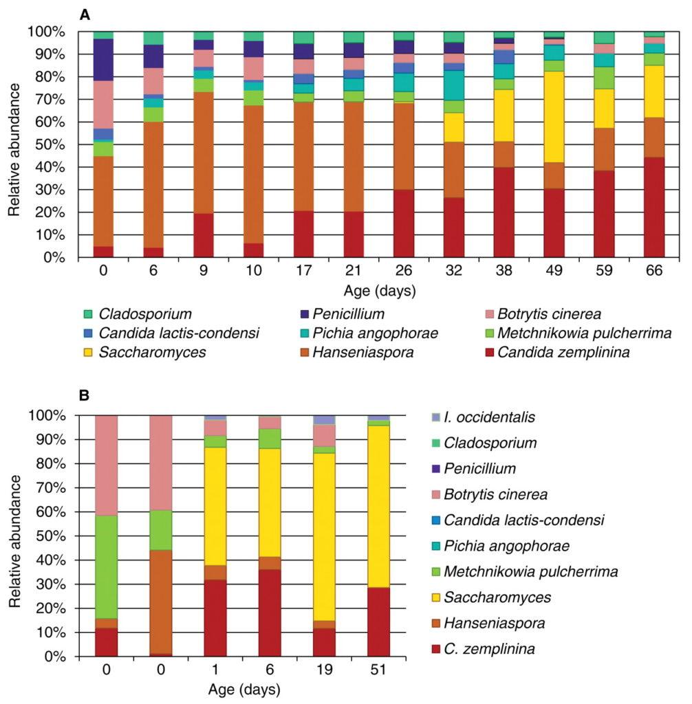 da Bokulich et al., Am J Enol Vitic. June 2012 63: 185-194 Ecco un esempio visivo di come cambiano le popolazioni di lieviti in una vasca nel tempo. è anche evidente la diversa fra annate, l'una rappresentata dalla parte alta (A) e l'altra sotto (B).