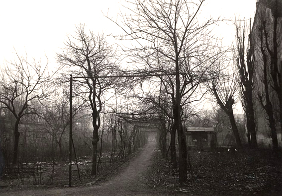 vigna_Leonardo_nel_1920_fotografie_di_Antonio_Paoletti