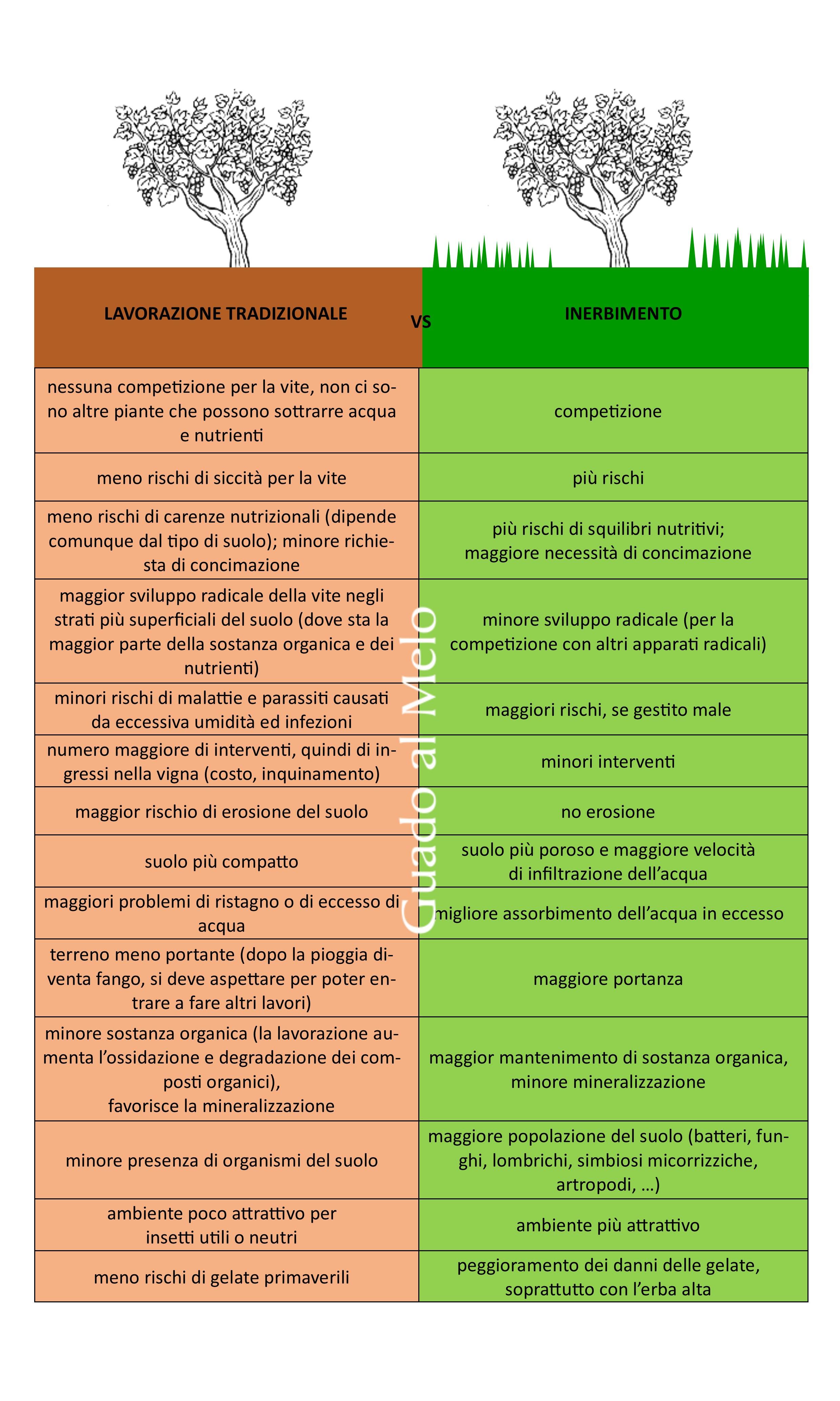 confronto fra inerbimento e lavorazione