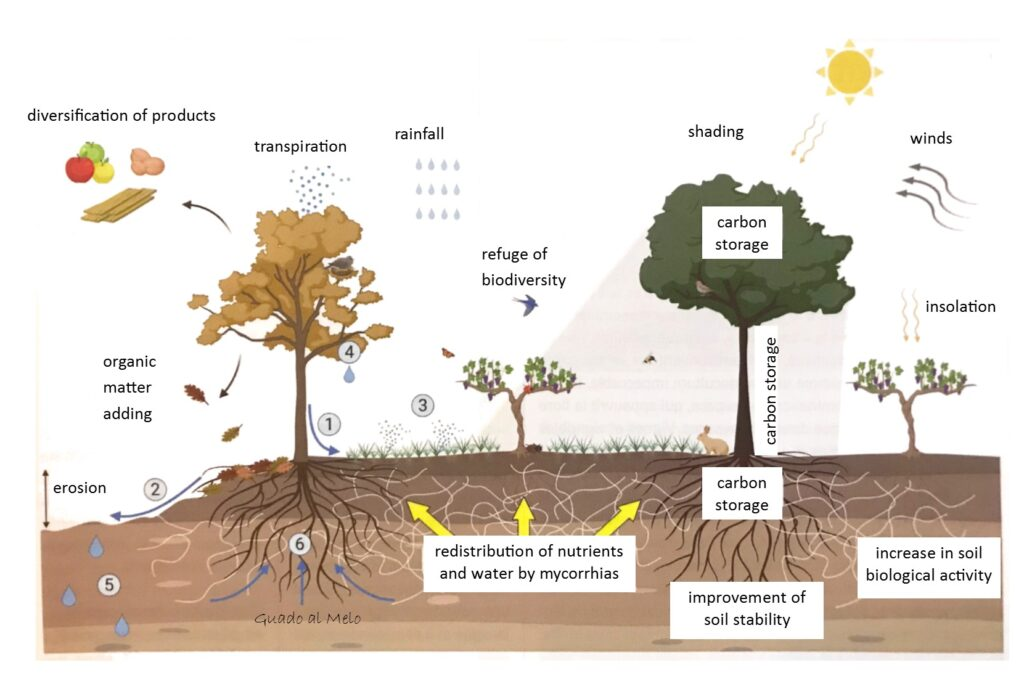 agroecol en
